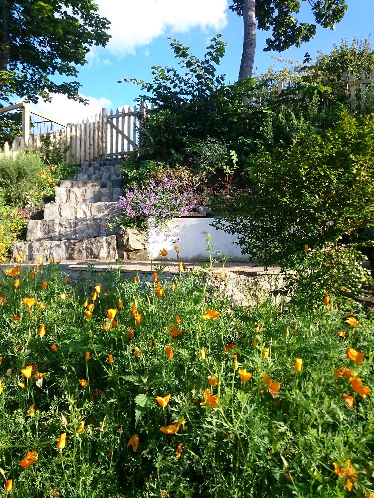 naturalised planting coastal garden Edinburgh