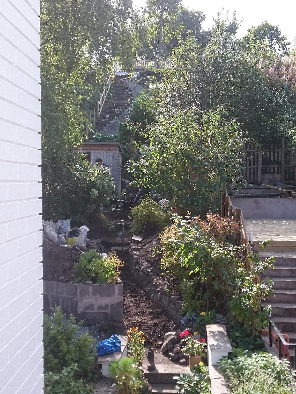 steep narrow coastal garden