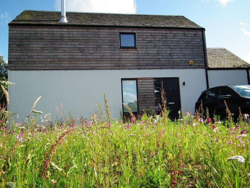 creating a wildflower meadow front garden Edinburgh