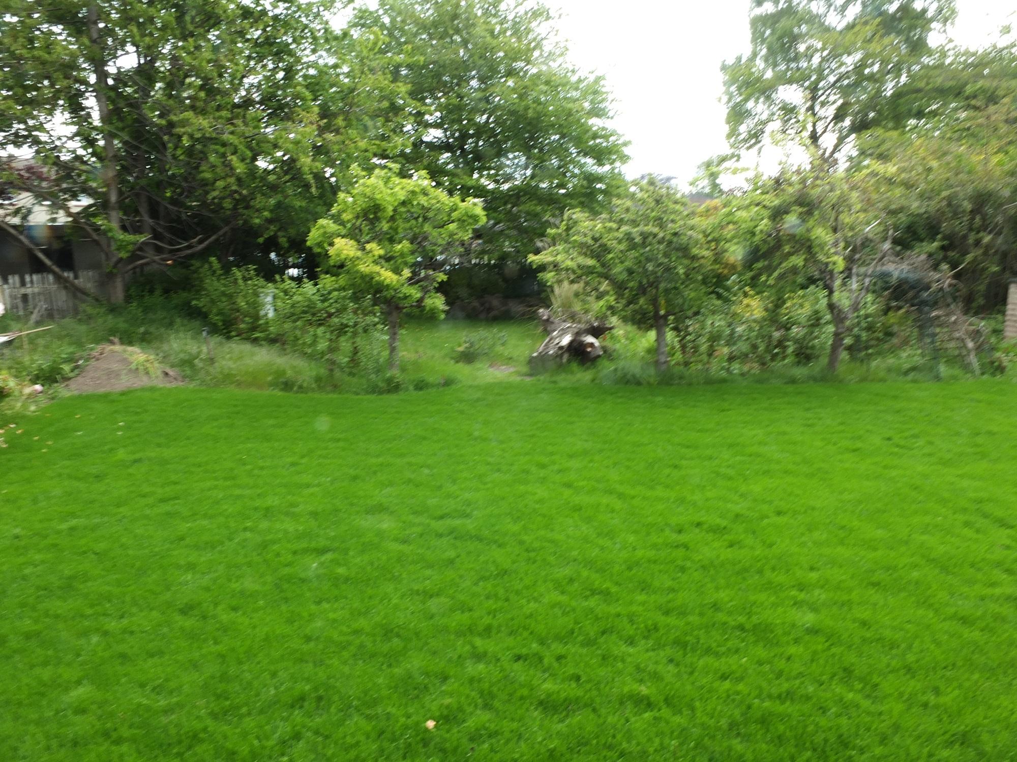 old garden redesign Edinburgh